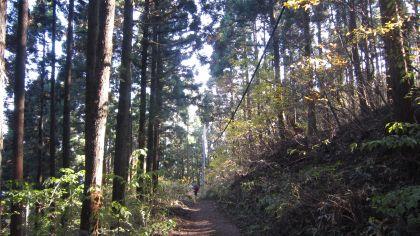 高尾山 2011年 秋